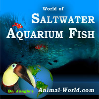 Saltwater Fish for the Aquarium