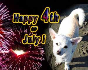 4th-of-July-dog_med
