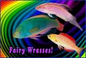 Fairy Wrasses, Creating an Aquarium Fantasy World