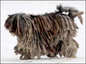 See Herding Dogs