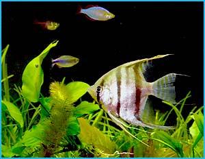 Animal-World Fish Care Guide