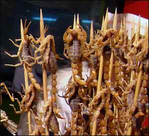 Skewered scorpions, Beijing, China