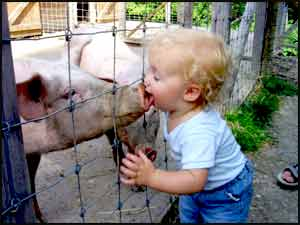 Little boy kissing a pig at the Redneck Petting Zoo
