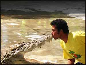 Kissing a crocodile