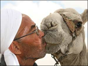 Man kissing a camel near a Sphinx in Cairo