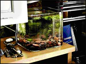 Nano aquariums and supplies