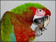 Parrot Cuisine, Food Facts Debunking the Fluff