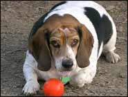 Obese Dog? 7 Tips to Loose the Fat