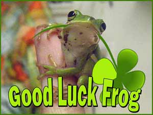 More Good Luck Frogs