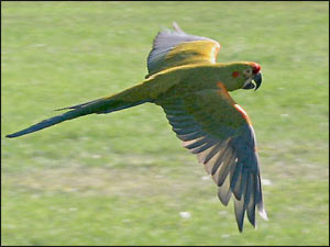 See more Macaws