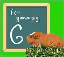 Guinea Pig Varieties
