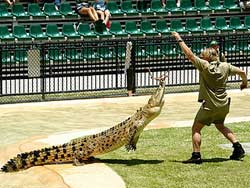 Steve Irwin feeding a crocodile, Australia Zoo, December 27, 2005