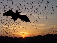 Halloween Mysteries, 7 Things You Probably Didn't Know About Bats