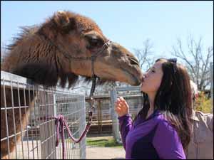 Woman kissing a camel!
