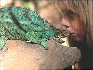 Kissing a Chameleon!