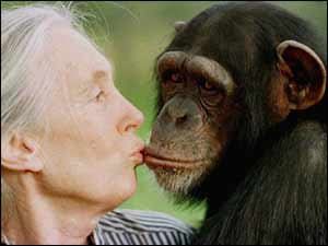 Jane Goodall with Tess, a female chimpanzee