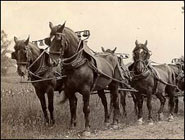 Conestoga Horse Breed, Ushering in 5 historical 'firsts' for America
