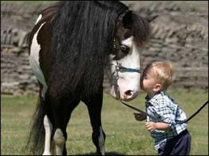 Boy kissing pet horse!