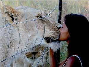 Woman kissing a lion!