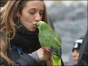 Kissing a pet parrot!