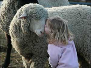 Girl kissing pet sheep!