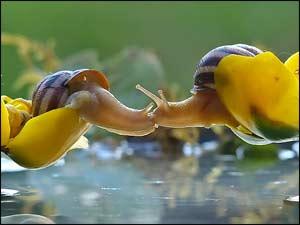 Kissing Snails!