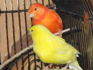 See all types of canaries