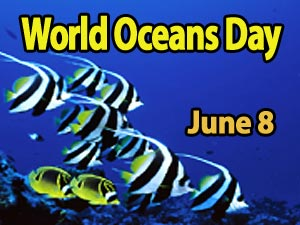 See interesting Ocean animals