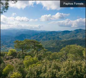 Paphos Forests – Western Cyprus