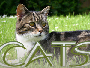 Cat Care, How to take care of a cat