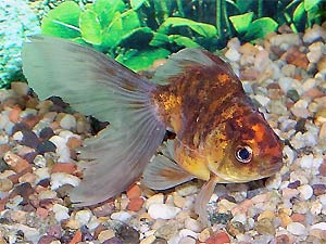 Aquarium Tropical Fish Freshwater Fish For The Aquarium Fish