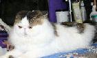 Types of Cats Fact Sheet