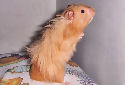 Animal-World's Featured Pet of the Week: The Hamster!