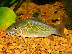 Treating Ich/Ick on Scaleless Fish Species