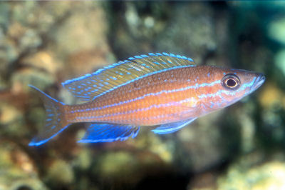 BlueNeon on oscar cichlid diseases