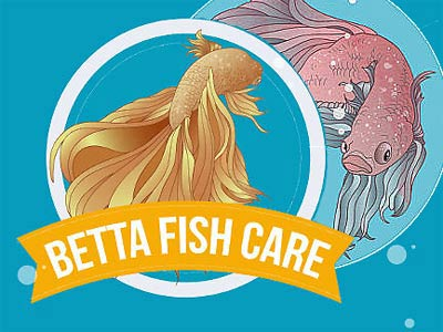 Betta Care, a Fishy Thing