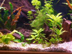 Cycling your aquarium aquarium nitrogen cycle start for Cycling a fish tank