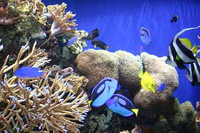 Guide to Reef Aquariums, Reef Aquarium Setup for any Reef Tank