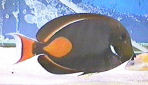 Picture of an Achilles Tang