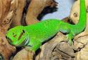 Selecting Your Lizard