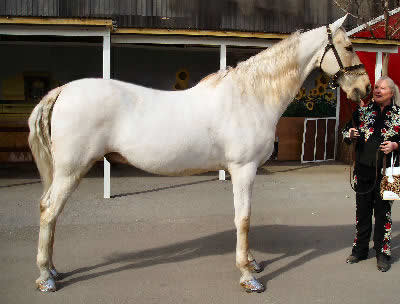 American Saddlebred, Pictures of American Paint Horses