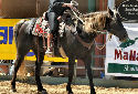 Click for more info on Kentucky Mountain Saddle Horse
