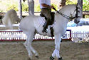 Click for more info on Lusitano