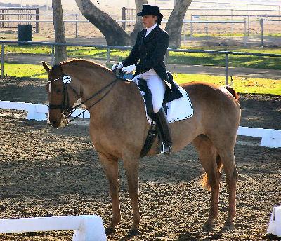Horse training tips using natural horsemanship