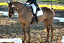 Click for more info on Swedish Warmblood