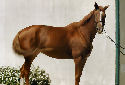 Animal-World info on Trakehner