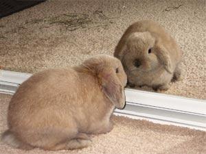 Bunny Companions Do Rabbits Make Good Pets